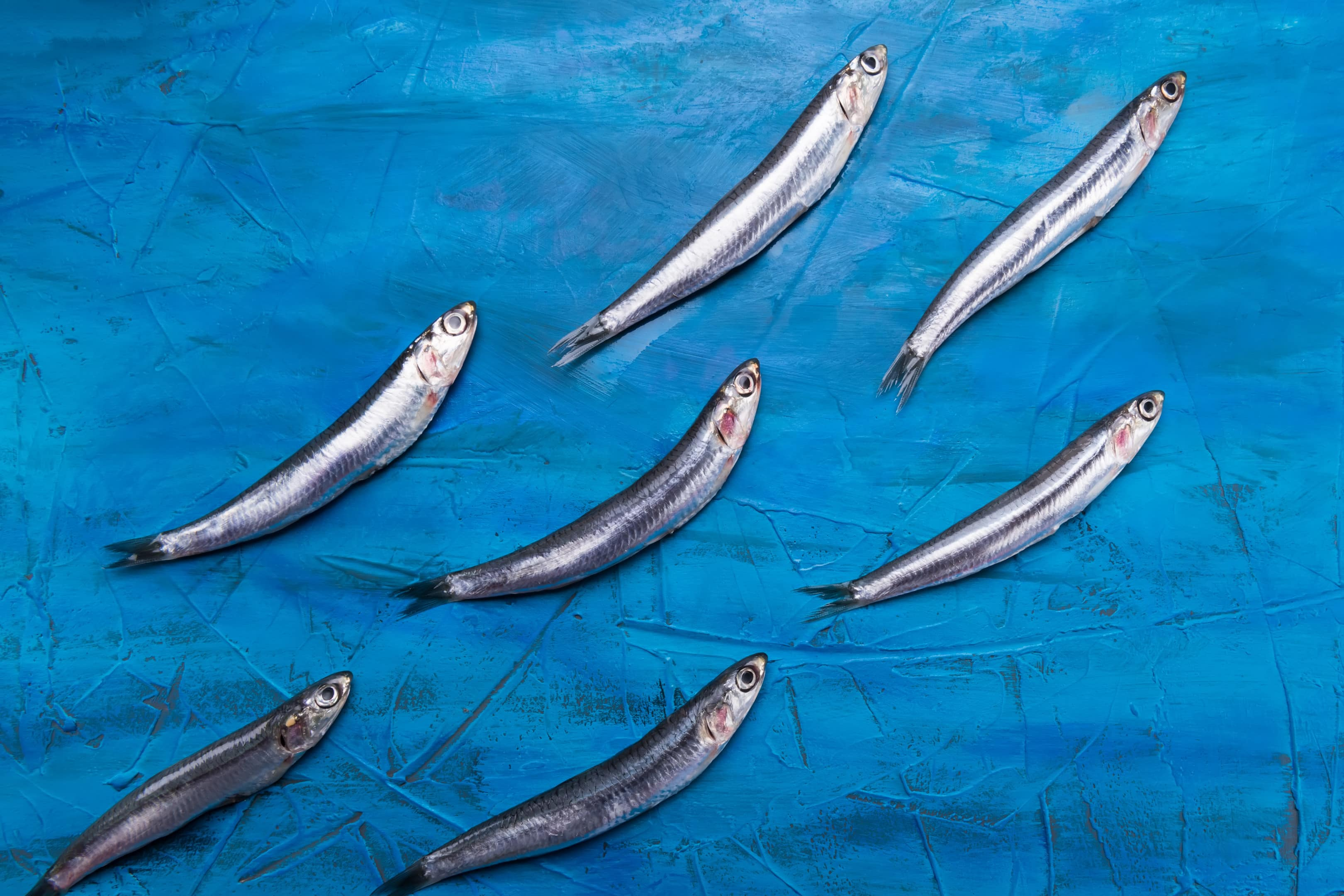 Anchovies are swimming on a blue sea background.