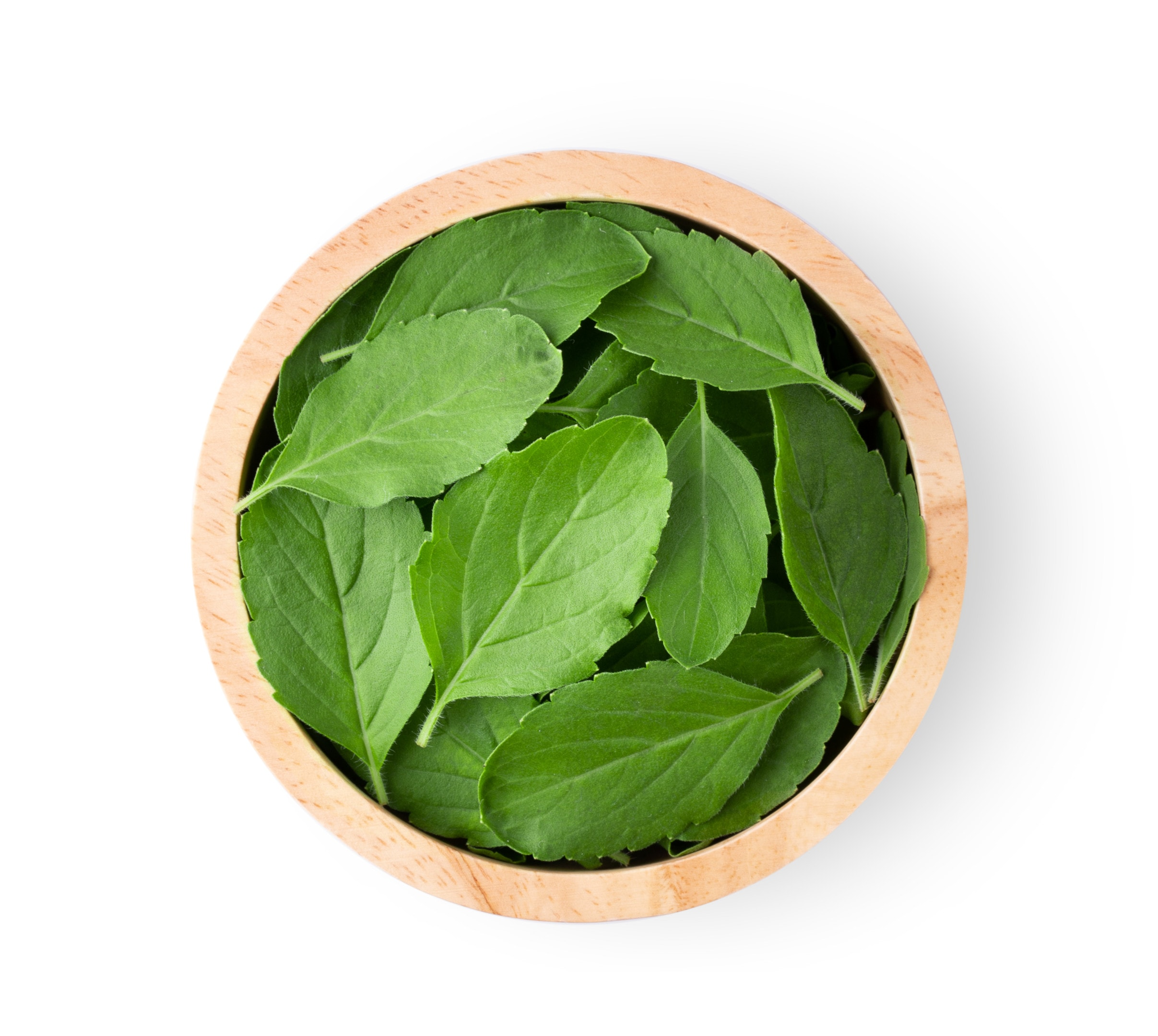 Basil leaves in wooden bowl on white table