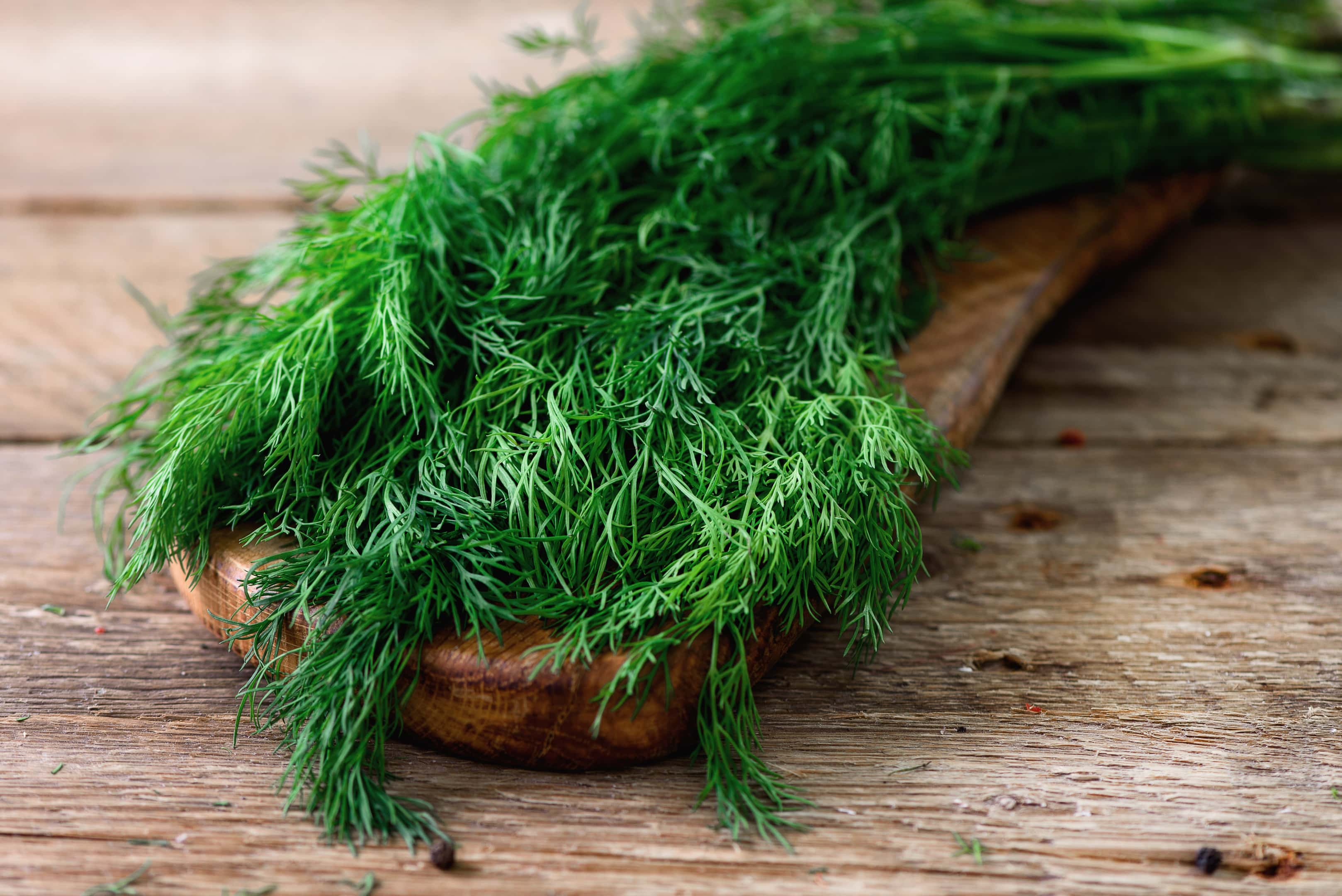Fresh dill on wooden spoon