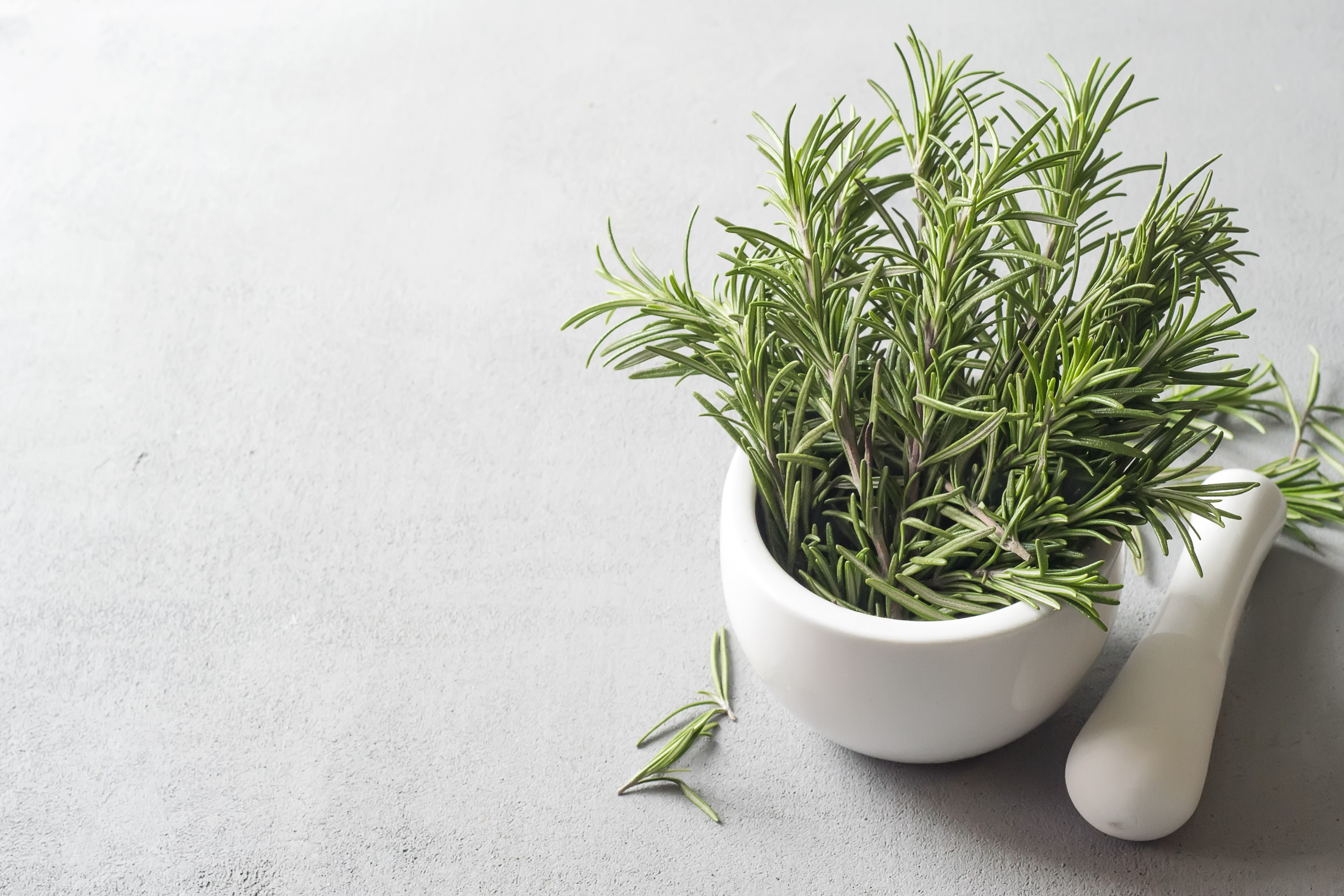 Rosemary in a ceramic bowl on a light background
