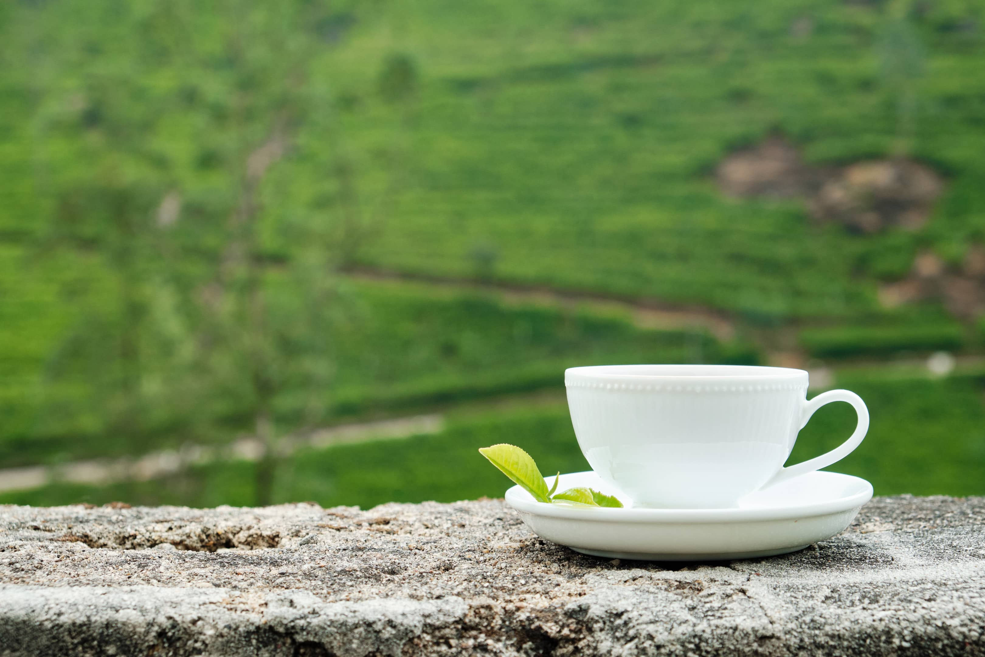White cup of white tea on plantation background