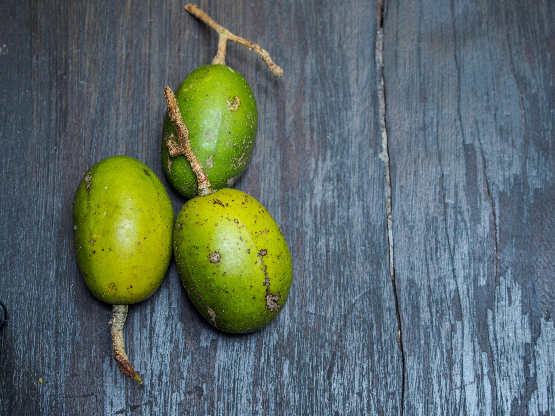 Ximenia americana plum