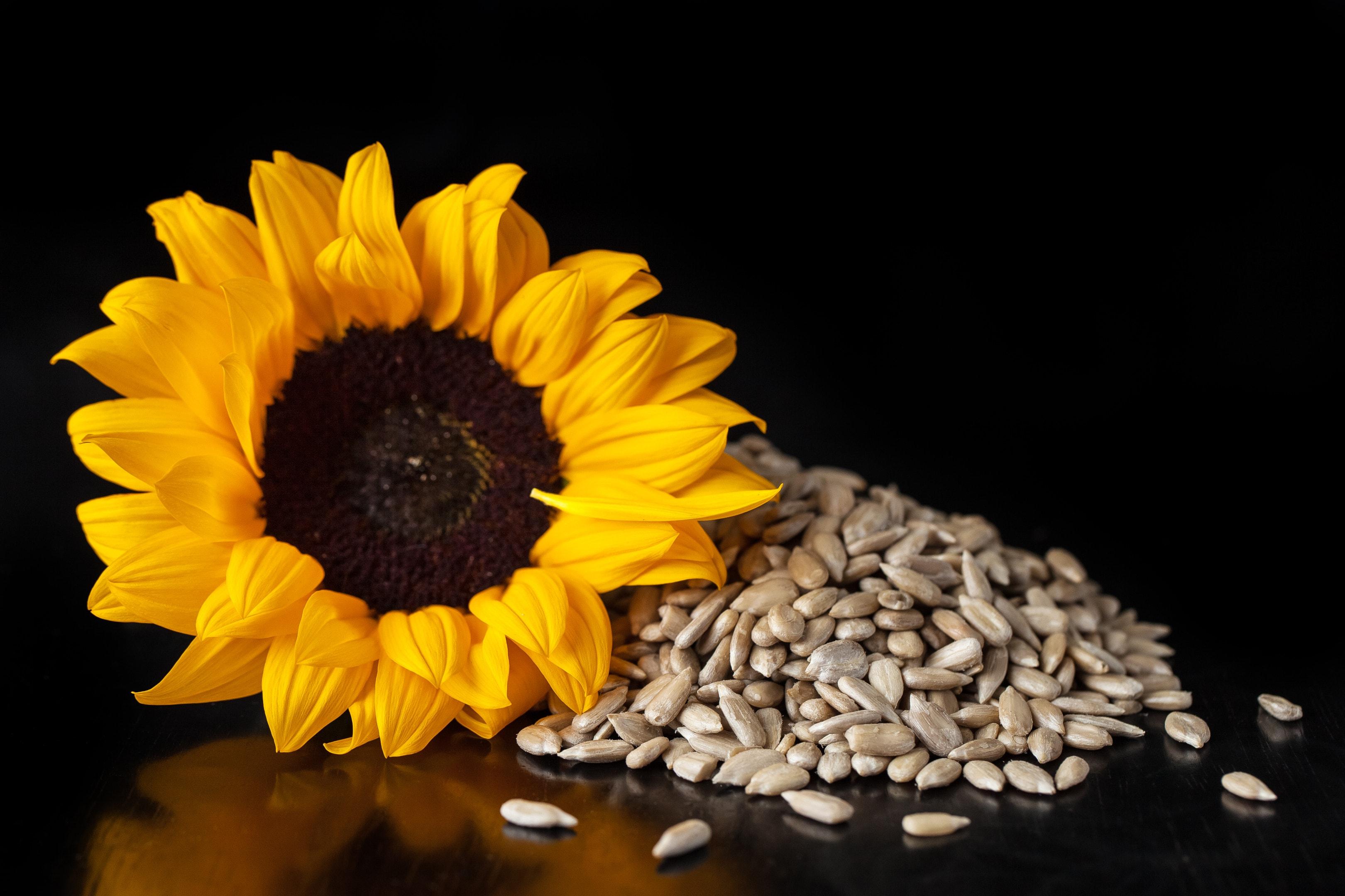 Flower sunflower and peeled sunflower seeds