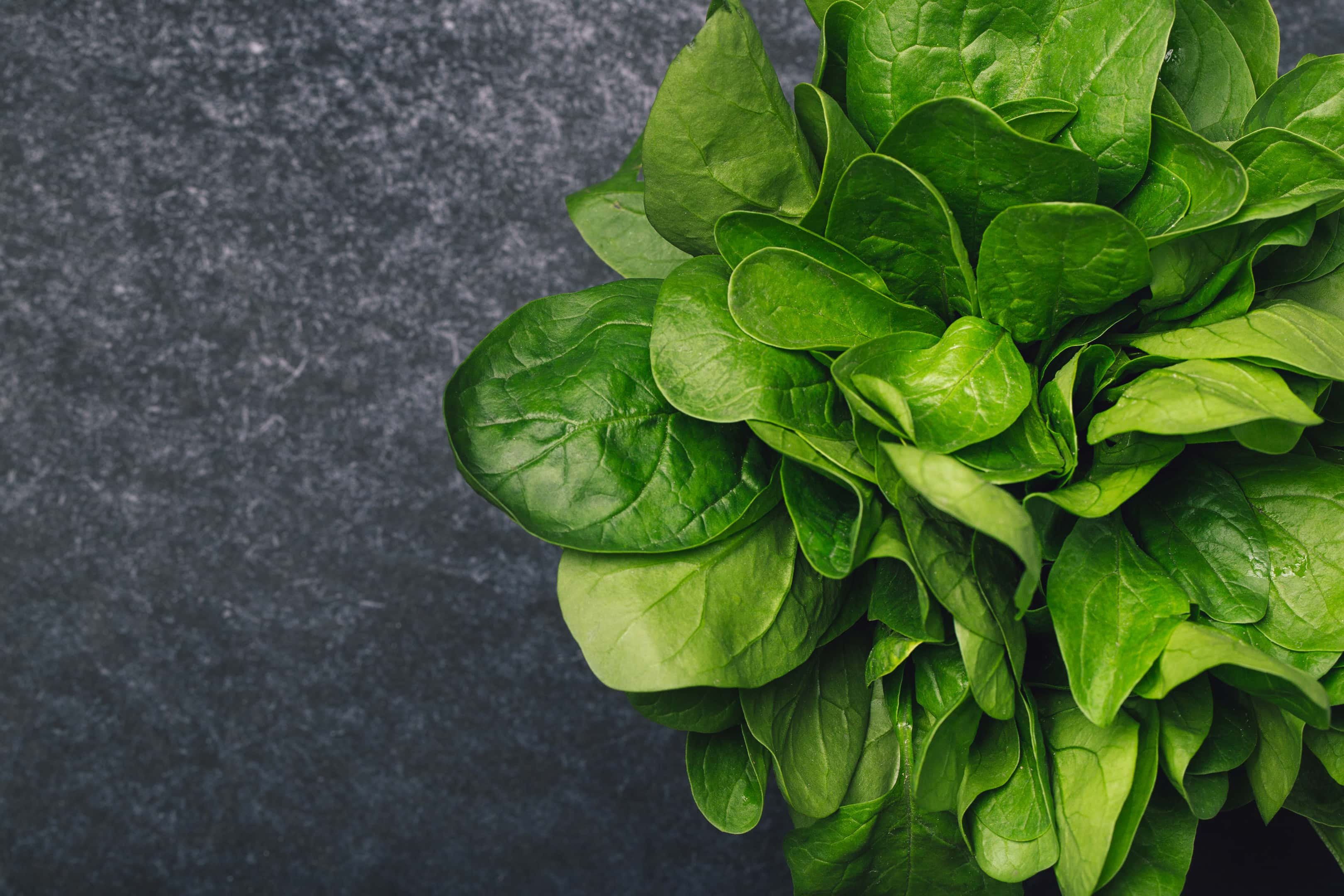 Fresh spinach on dark background