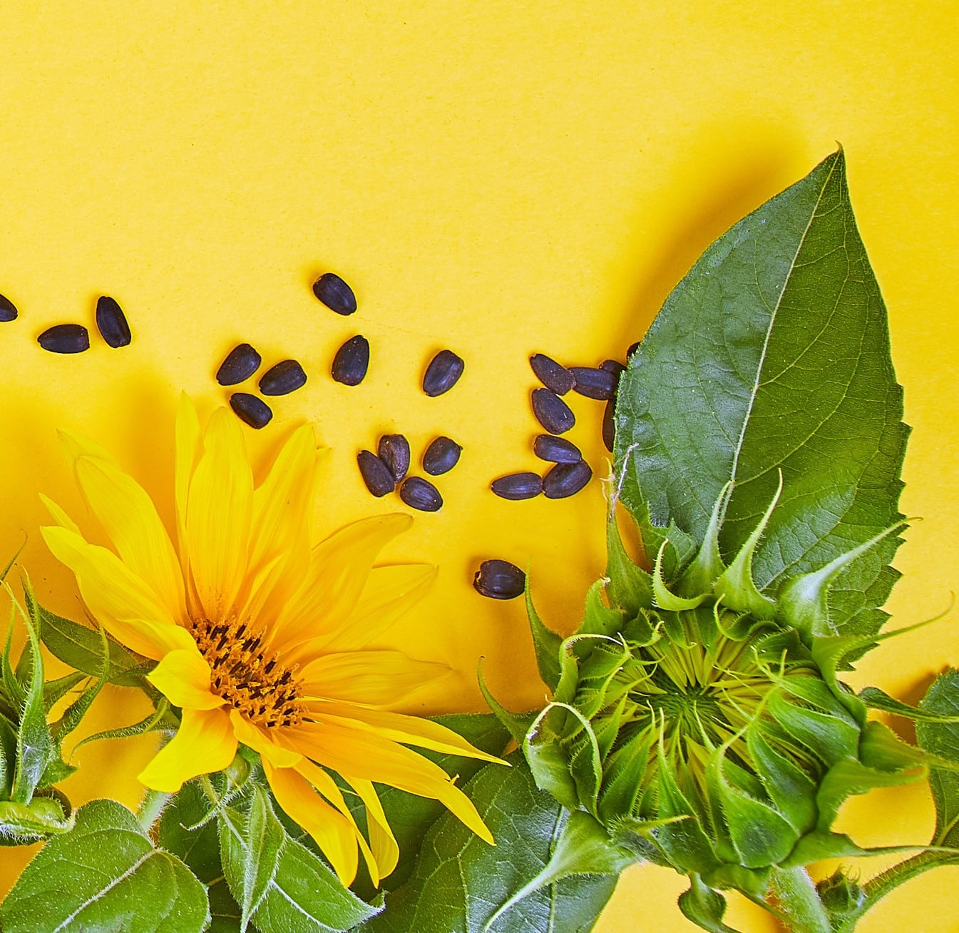 Sunflower Seeds for Keto: All You Need to Know About Them ...