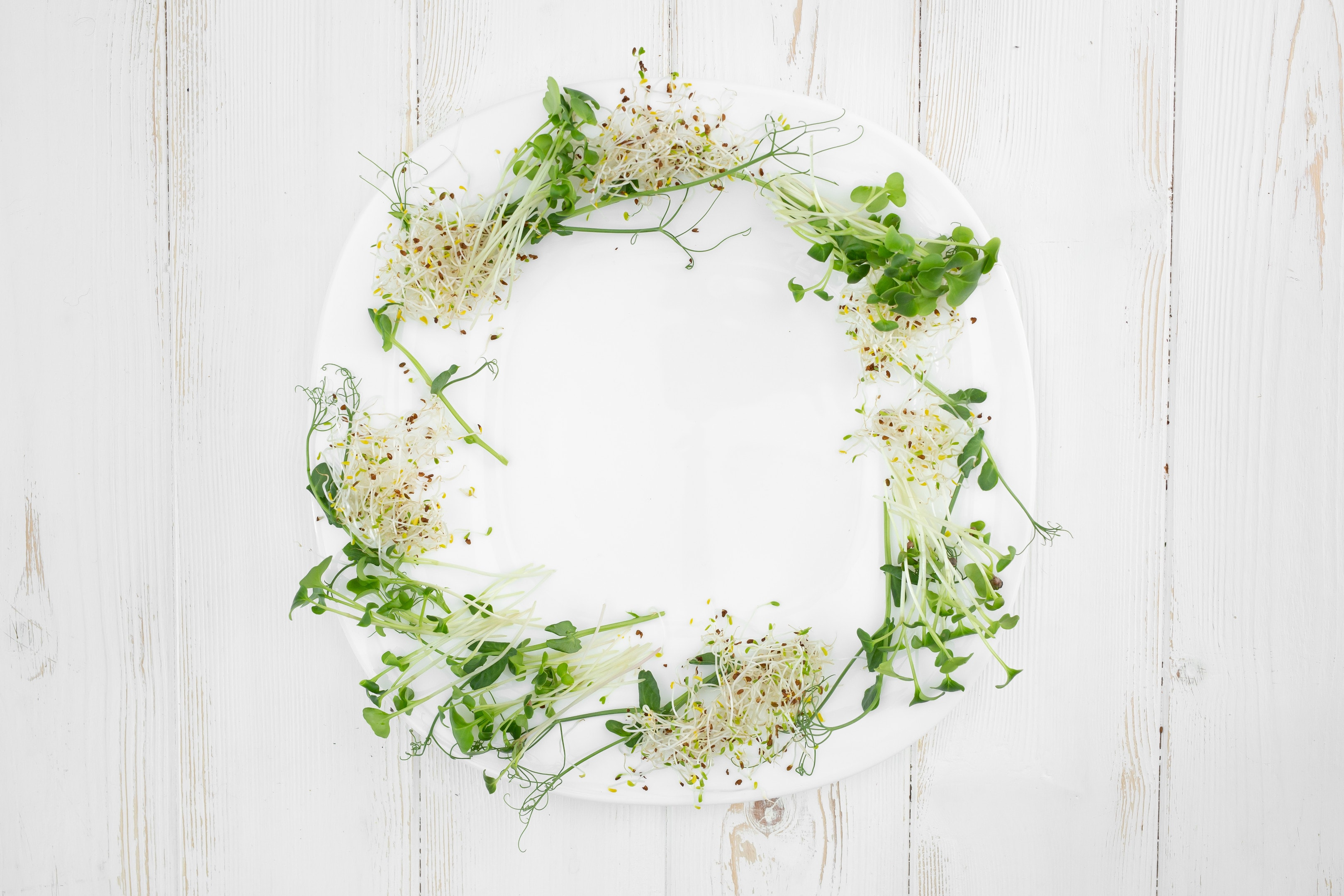 White Plate With Pea Radish and Alfalfa Sprouts