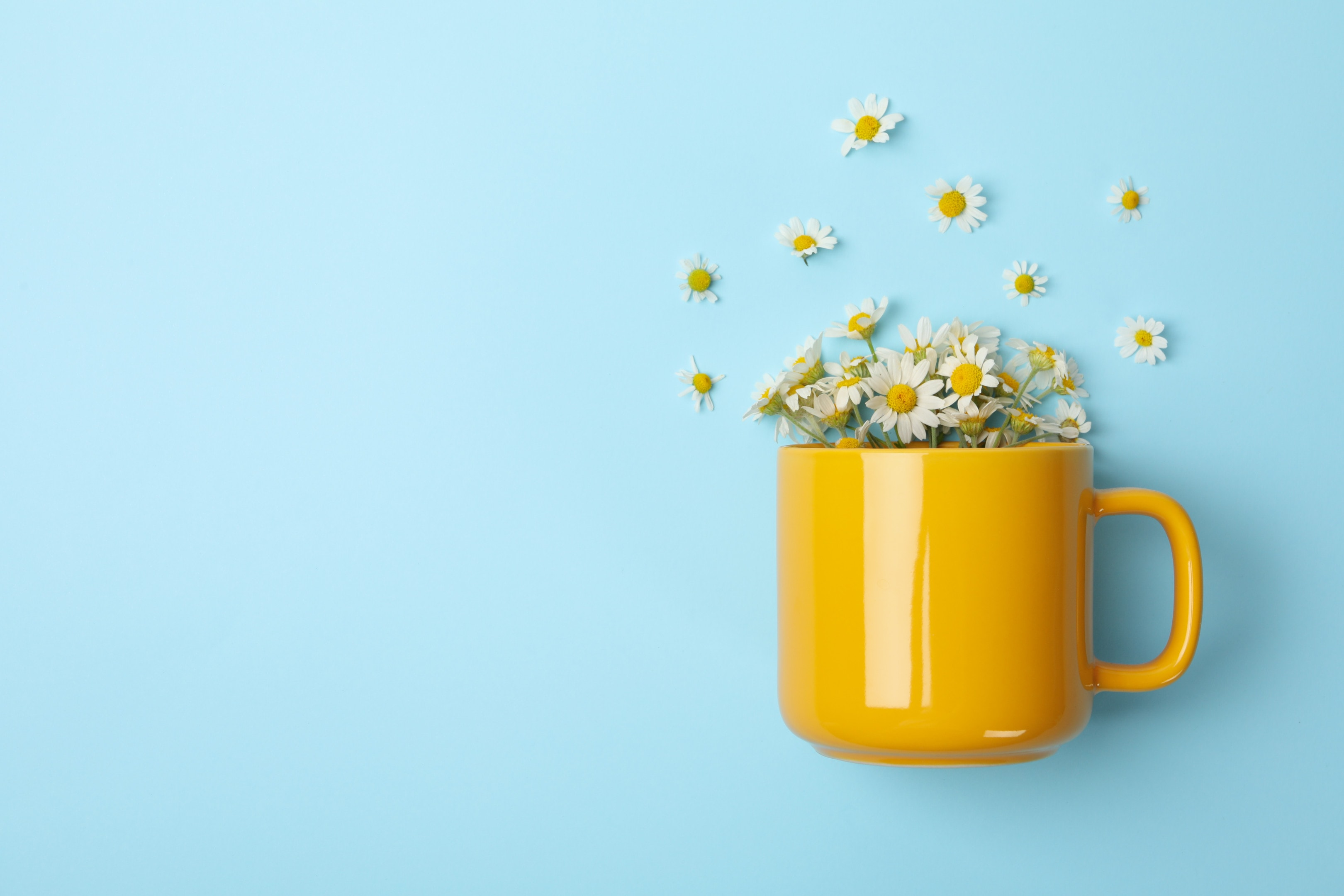 Cup of chamomile tea on blue background