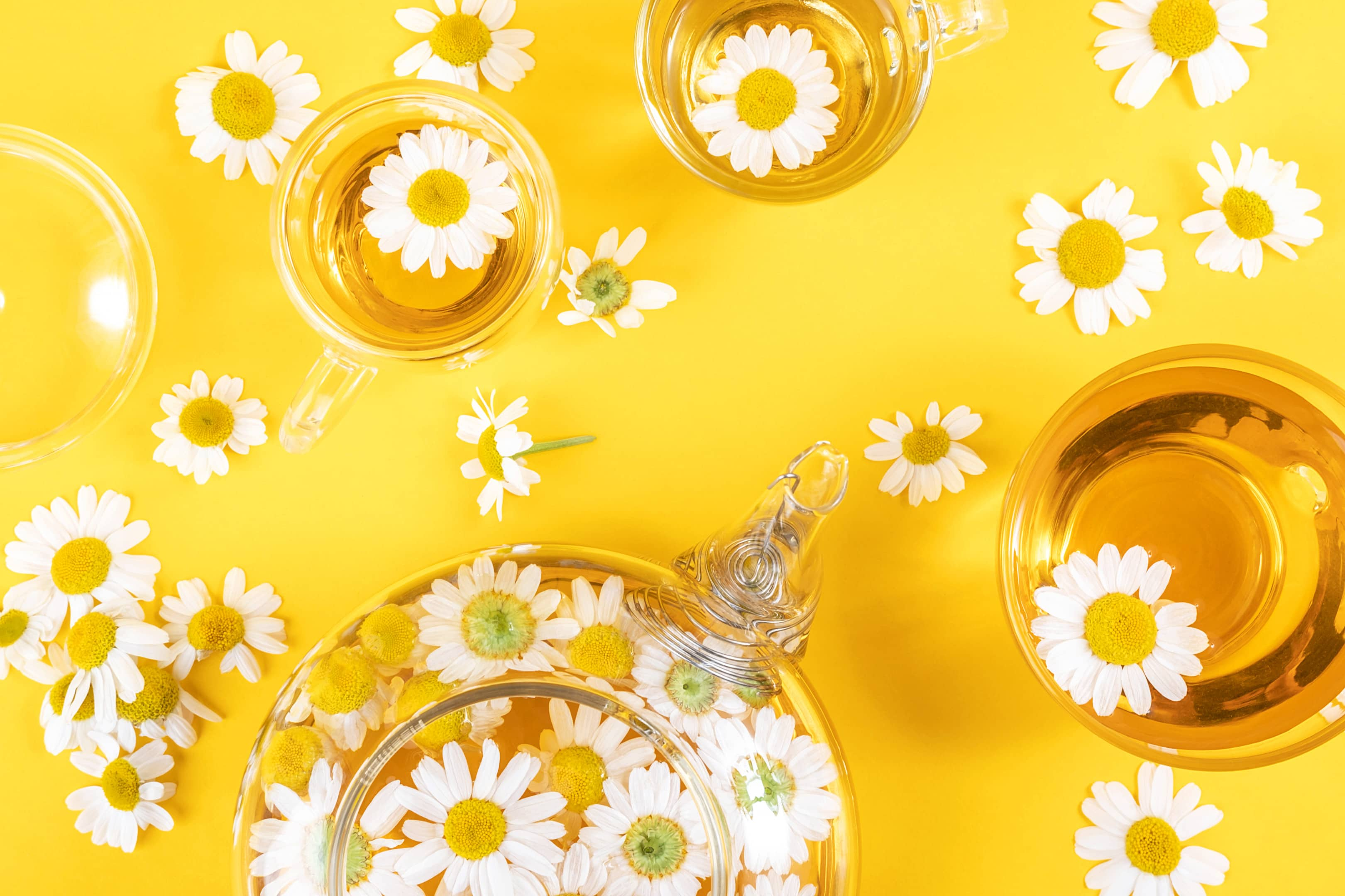 Three cups and transparent teapot with chamomile tea and chamomile flowers
