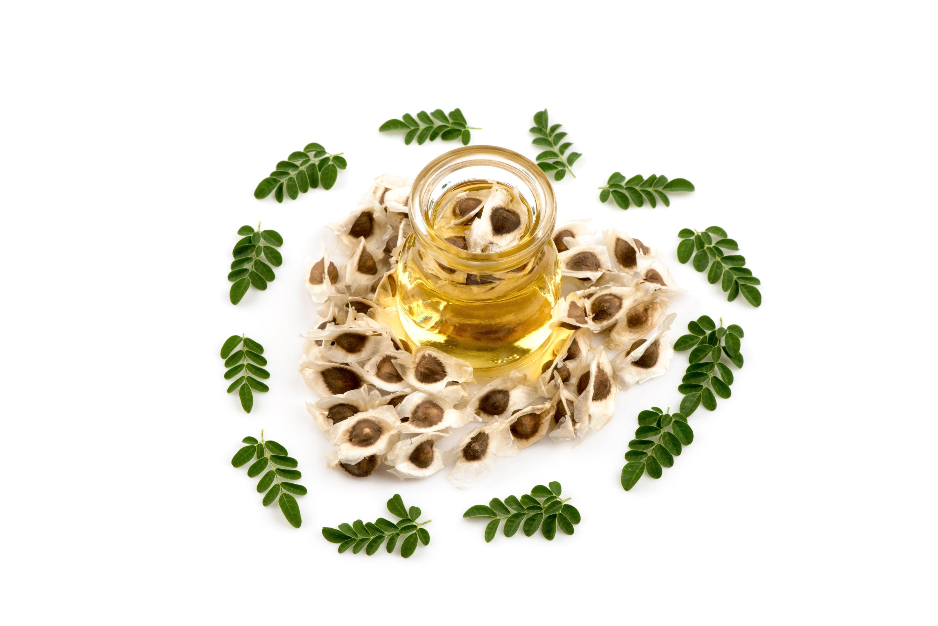 Dried moringa seeds with moringa oil and moringa leaves
