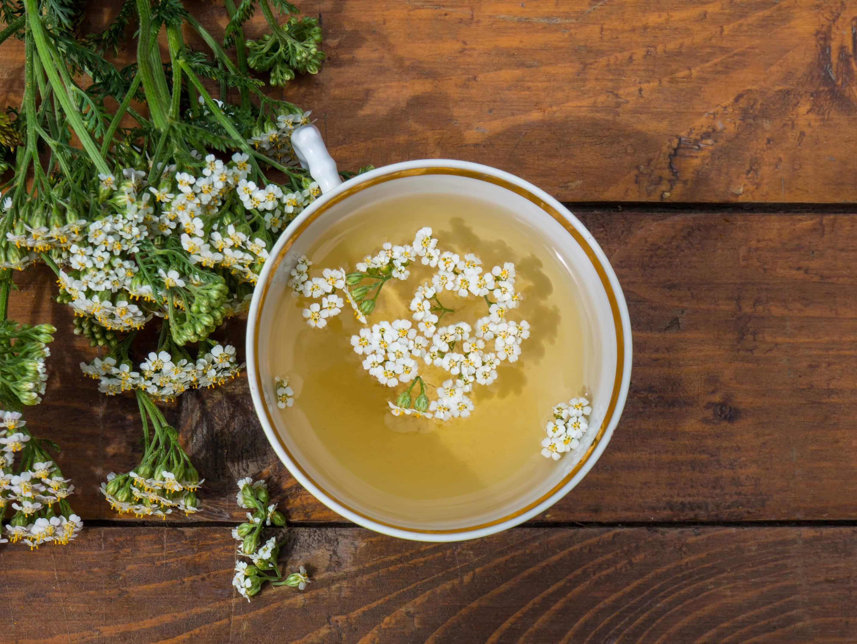 Yarrow herb — medicinal plant — tea mug with yarrow flowers