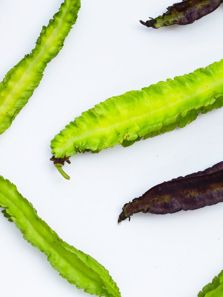 Winged bean on white background.